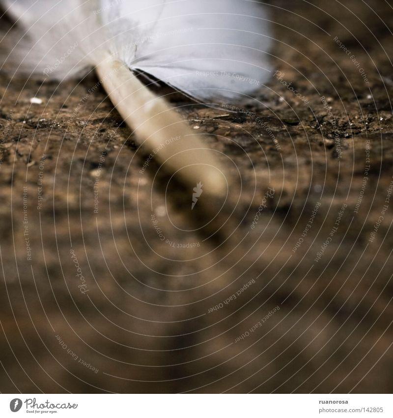 Haare & Frisuren Vogel Erde Behaarung Boden Bodenbelag Feder Fell Stoff unten Schilfrohr Blattadern Kiel Flaum Garnspulen gerupft