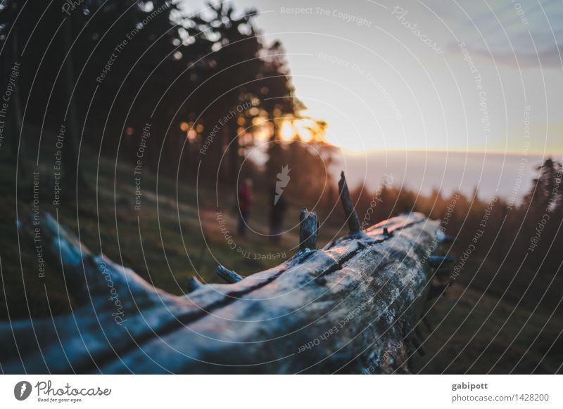 Sonne geht Pflanze Baum Erholung Landschaft ruhig Wald Berge u. Gebirge Leben Herbst Gefühle Freiheit Stimmung Wetter Zufriedenheit Tourismus Erde