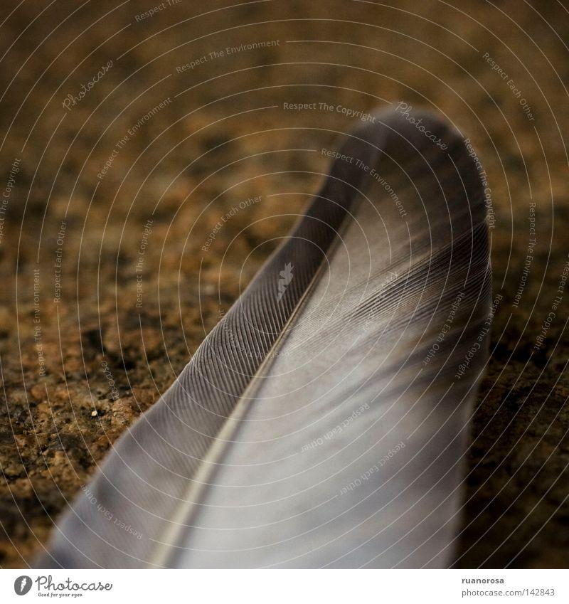 Vogel Erde Boden Bodenbelag Feder Flügel Stoff unten bedecken Flaum