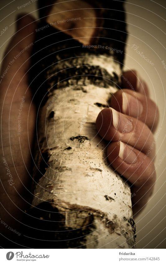 stammbaum Leben Hand Finger Fingernagel Daumen Natur Pflanze Holz festhalten greifen Baumstamm Brennholz Baumrinde Innenaufnahme Nahaufnahme Detailaufnahme Frau