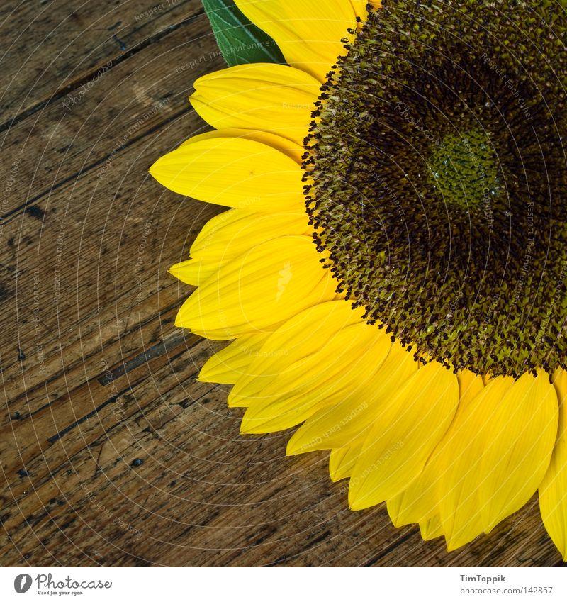 Noch ne Sonnenblume Blume Tisch Küche Pflanze Blüte Holz Frühling Sommer gelb Häusliches Leben küchentisch Blühend Maserung Dekoration & Verzierung