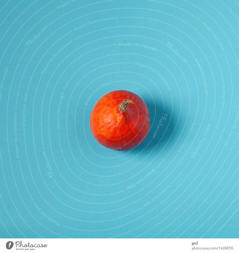 Kleiner Kürbis Lebensmittel Gemüse Kürbisgewächse Kürbiszeit Ernährung Bioprodukte Vegetarische Ernährung Halloween Herbst ästhetisch Gesundheit lecker blau
