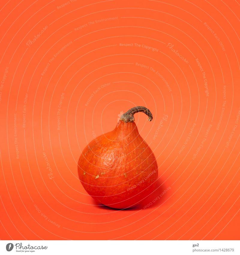 Kürbis Herbst Essen Gesundheit Lebensmittel orange ästhetisch Ernährung Gemüse lecker Bioprodukte Vegetarische Ernährung Herbstbeginn Kürbisgewächse Kürbiszeit