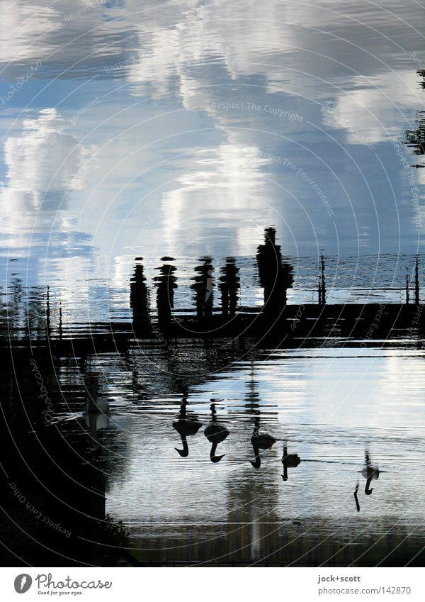 Schwanensee Ausflug Wolken Schönes Wetter Park Tiergruppe träumen Stimmung ruhig Inspiration Surrealismus Brücke Fantasygeschichte Wasseroberfläche Besucher