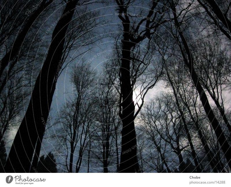 Schein der Toten Baum Licht Nacht Langzeitbelichtung mystisch unheimlich dunkel gruselig Himmel Mond blau