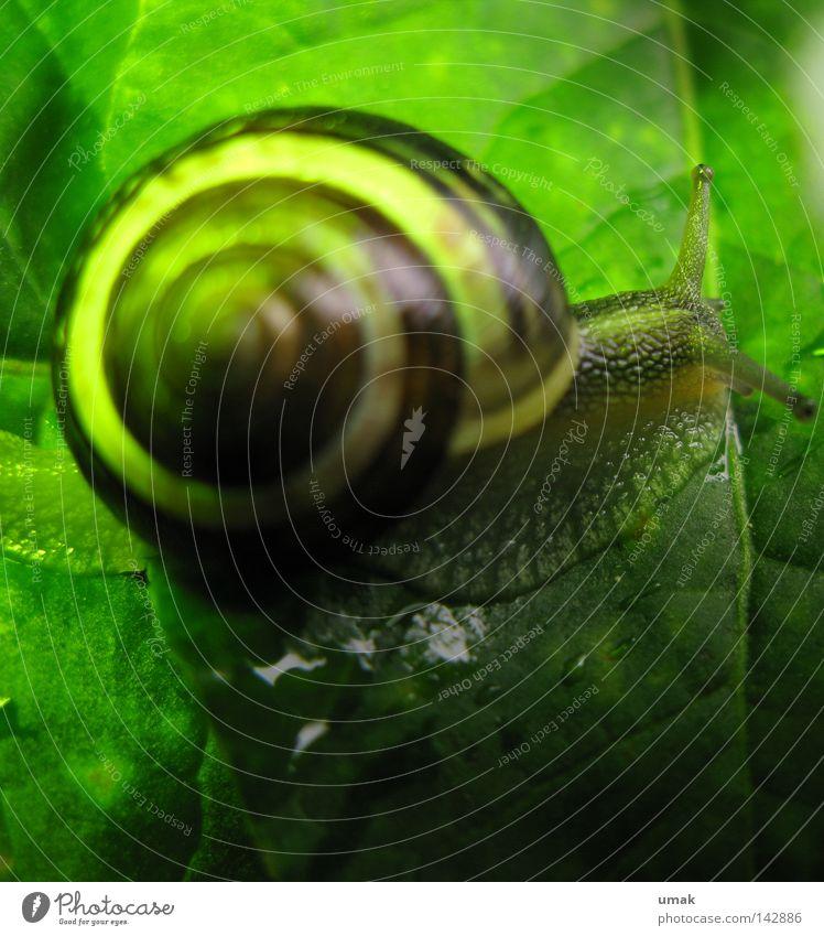 Schnecke Schneckenhaus gedreht Spirale Blatt grün schmierig Zeitlupe Tier Weichtier Schalen & Schüsseln schlierig schneckengetriebe spiralenlinie