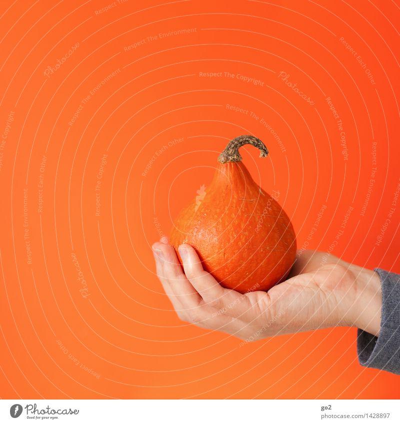 Kürbiszeit Hand Essen Gesundheit klein Lebensmittel orange ästhetisch Ernährung Finger festhalten Gemüse lecker Bioprodukte herbstlich Vegetarische Ernährung Kürbis