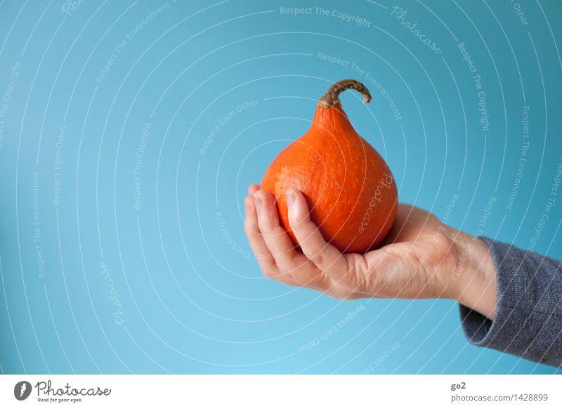 Kleiner Kürbis Mensch blau Hand Erwachsene Herbst Essen Gesundheit klein Lebensmittel orange ästhetisch Ernährung Finger festhalten Gemüse lecker