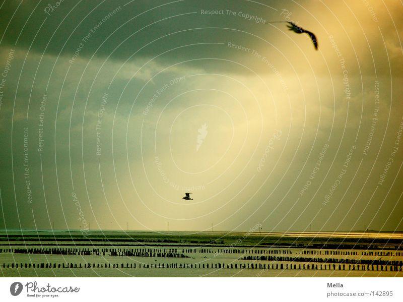 o.T. Natur Himmel Sonne Meer Strand Wolken Tier gelb grau Landschaft Vogel Küste Wetter Umwelt fliegen natürlich