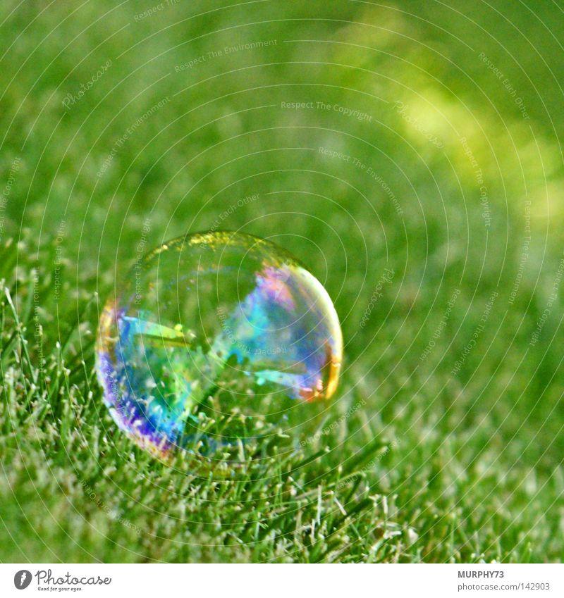 Hilfe, nicht so kitzeln..... sonst platze ich! grün Rasen liegen Vergänglichkeit Kugel Blase durchsichtig Seifenblase Luftblase Regenbogen sensibel Seife Transparente regenbogenfarben Glaskugel