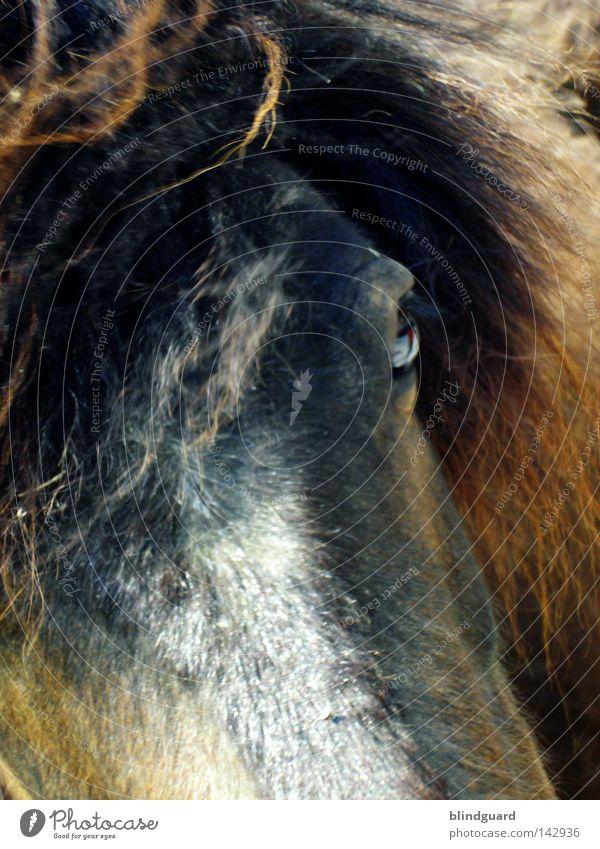 Wild Horses Auge Tier dunkel Haare & Frisuren braun laufen Pferd Freizeit & Hobby Fell entdecken Rennsport Säugetier bleich Schwanz Pony