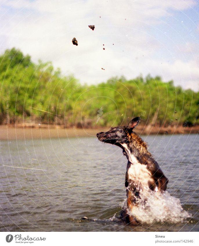 Aqua Aerobic I Farbfoto Außenaufnahme Textfreiraum links Freude Spielen Sommer Wassersport Sand Wassertropfen Sonne Schönes Wetter Küste See Fell Haustier Hund