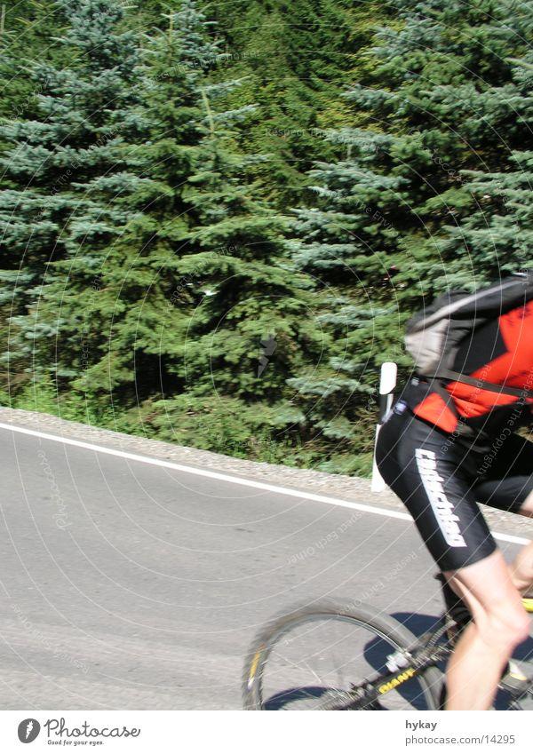 madmisson Baum Sonne Straße Sport Wald Fahrrad Zweig Marathon Erzgebirge