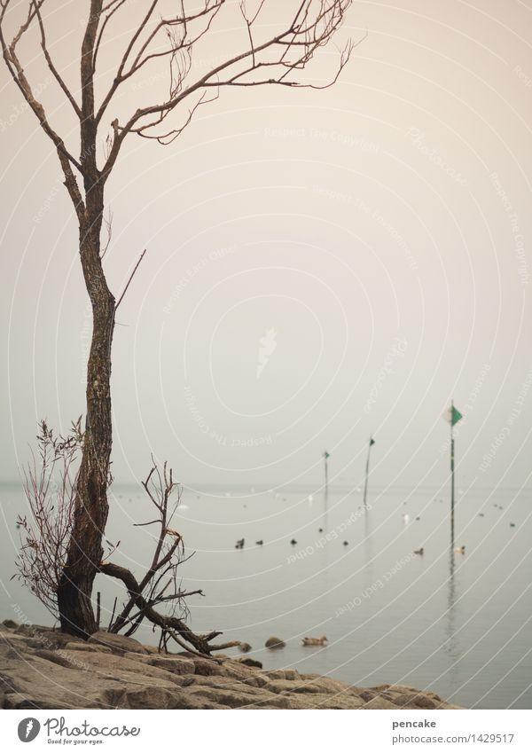 ebbe Umwelt Natur Landschaft Urelemente Wasser Herbst Klimawandel Wetter Nebel Dürre Baum Seeufer Zeichen Hinweisschild Warnschild außergewöhnlich bedrohlich