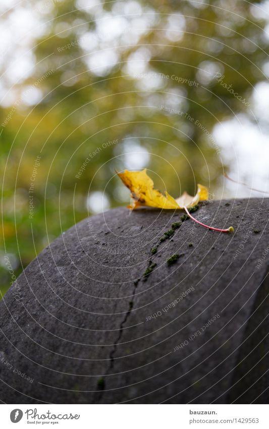 \. Garten Umwelt Natur Himmel Wolken Herbst Baum Blatt Grab Grabstein Friedhof Stein Traurigkeit kalt natürlich trist Gefühle Stimmung ruhig Glaube Sorge Trauer