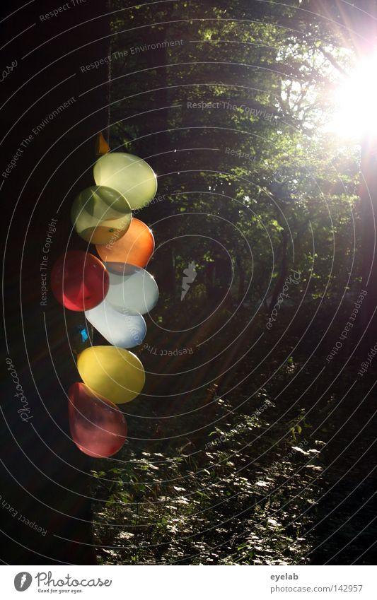 """""""OOOO"""" Baum Gummi Holz Luft Füllung Wald Sonnenlicht Sonnenstrahlen Licht Reflexion & Spiegelung Lichtfleck blenden Gegenlicht grell mehrfarbig Spielzeug Party"""
