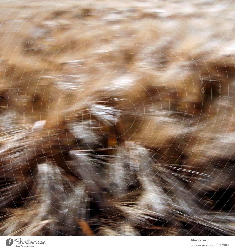 Dynamik Natur Pflanze Bewegung braun Lebensmittel Wind Ernährung Getreide Appetit & Hunger Ernte Backwaren anstrengen Landwirt Brötchen Kornfeld Weizen