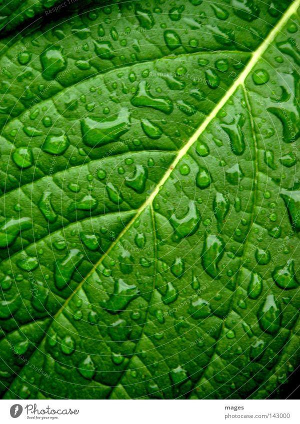 Betröpfelt Pflanze Wasser Wassertropfen Regen Blatt Grünpflanze glänzend einzigartig nass grün Farbfoto Nahaufnahme Makroaufnahme Strukturen & Formen