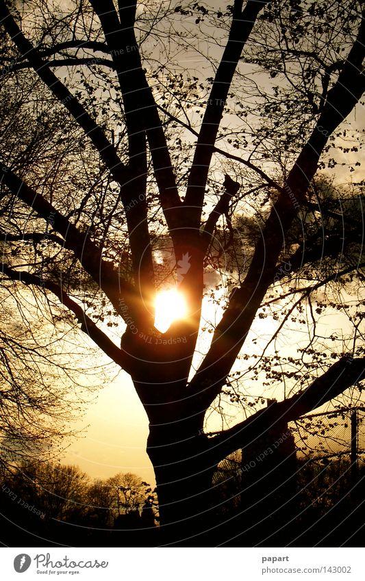 5 vor Ast Baum Frieden Silhouette Gegenlicht Geäst Zweige u. Äste Baumstamm Nacht Abend Sonnenuntergang Sommer Herbst Winter Jahreszeiten Zeit glänzend