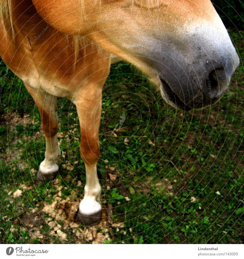 Jolly Jumper Farbe grün Tier Wiese blond Nase Pferd Säugetier Haarsträhne Mähne