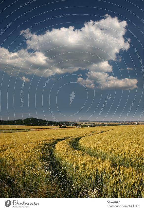 Idyllisches Gerstenfeld mit Traktorspur Natur schön Sommer Wolken Ernährung gelb Blüte Berge u. Gebirge Landschaft Feld Deutschland Hintergrundbild Lebensmittel