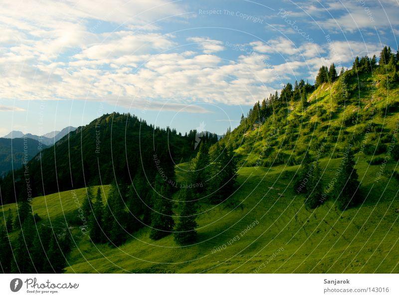 Teletubbie-Land Berge u. Gebirge hoch Wiese aufwärts Hochgebirge Bergsteigen Wolken Cirrus Altokumulus floccus Kumulunimbus Baum Tanne Fichte Wald-Kiefer