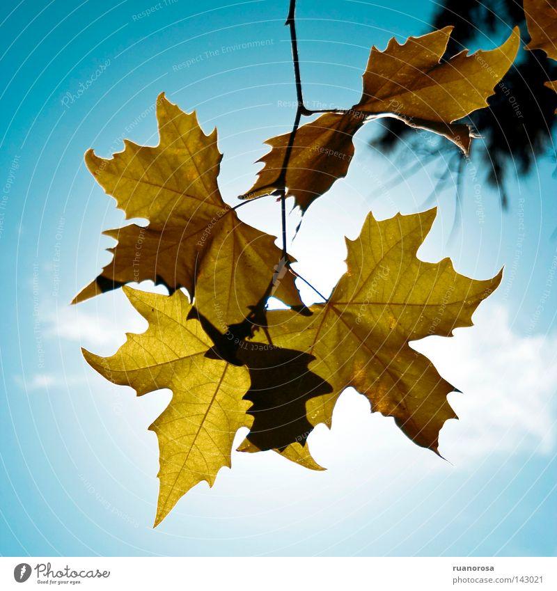 Foliage Blatt Baum Himmel Zweige u. Äste Park Wolken Sommer grün blau Ast