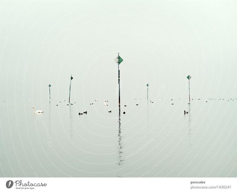 wasserzeichen Natur Landschaft Herbst See Stimmung Nebel Wildtier Hinweisschild Zeichen Schwarm Schwan Entenvögel Verkehrszeichen Warnschild Bodensee Seezeichen