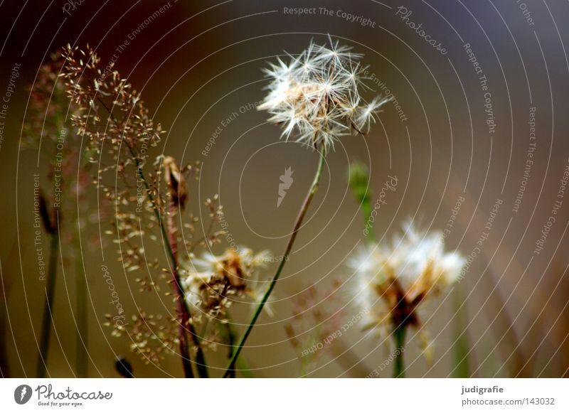 Wiese Natur schön Blume Farbe Umwelt Gras glänzend einfach zart Stengel Pollen bescheiden Staubfäden Krankheit