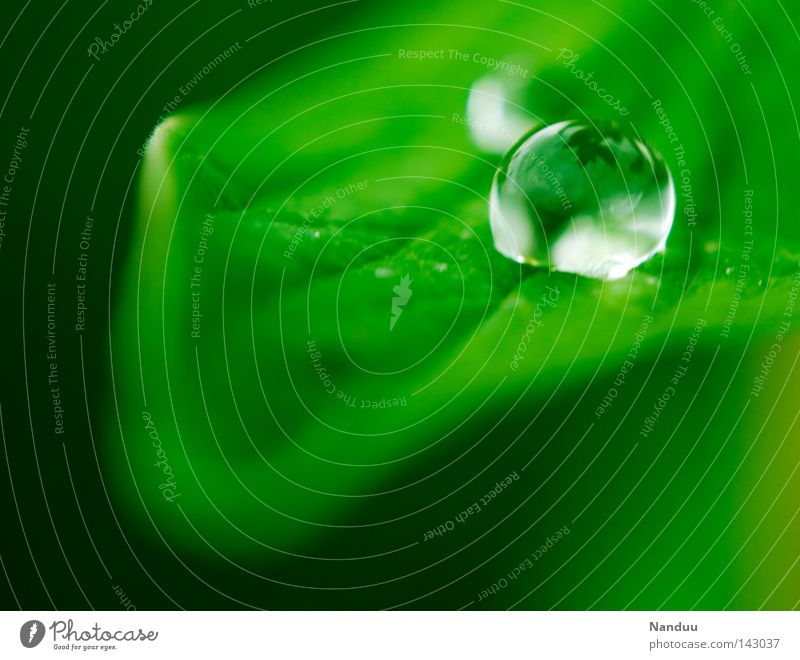 Jetzt und Hier Farbfoto Nahaufnahme Makroaufnahme Textfreiraum unten Tag Schwache Tiefenschärfe Leben harmonisch Wohlgefühl ruhig Sommer Umwelt Natur Wasser