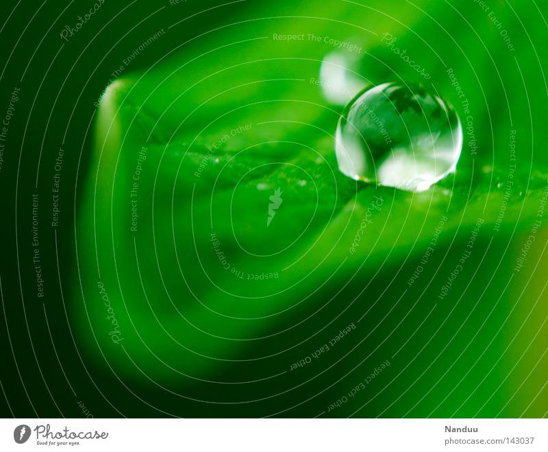 Jetzt und Hier Natur grün Sommer Wasser Blatt ruhig Umwelt Leben glänzend frisch Idylle Wassertropfen Sauberkeit rund Schutz Tropfen