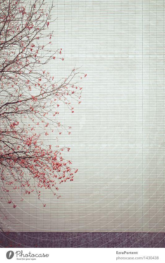 Wandgestalt Pflanze Baum Blatt Haus Umwelt Architektur Herbst Gefühle Gebäude Mauer grau Stein Stimmung Linie Fassade