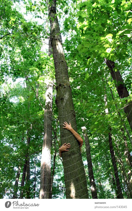 naturverbunden Natur Baum Sonne grün Sommer Blatt Wald Holz Arme Sicherheit Schutz festhalten Baumstamm Schönes Wetter ökologisch Mensch