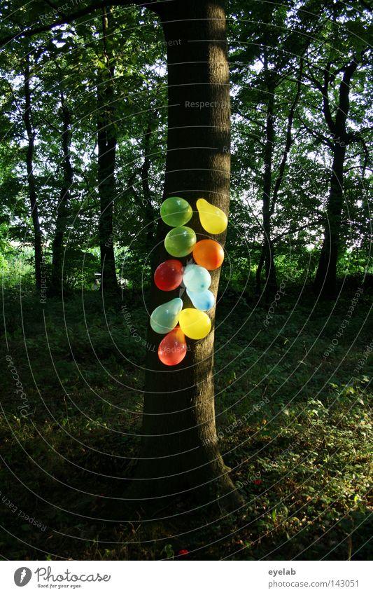 GUMMIBAUM grün blau rot Sommer Freude Blatt gelb Wald Herbst Party Spielen Frühling Garten Holz Park Luft