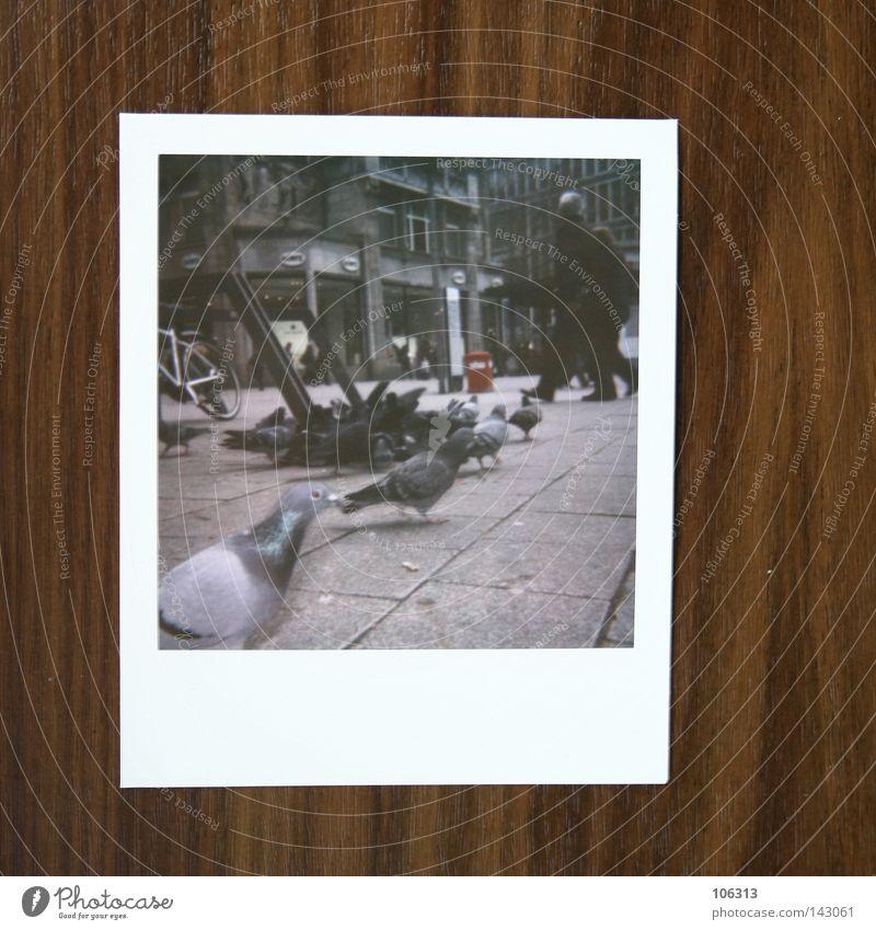 Hamburg.Tauben.Polaroid Mensch Polaroid Stadt grau Menschengruppe Vogel Beton Asphalt Verkehrswege Stadtzentrum Taube Szene