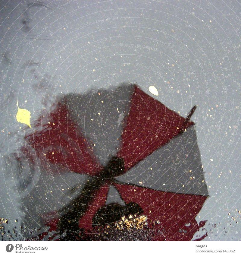 Regentag Wasser Blatt Straße Schutz Asphalt Regenschirm Spiegel Verkehrswege Schirm Pfütze Teer Fototechnik rot-weiß