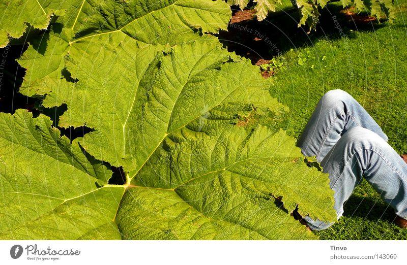 unterm Mammutblatt Natur grün blau Pflanze Sommer Blatt Gras Garten Park Beine groß Jeanshose Pause Freizeit & Hobby Sonnenschirm verstecken