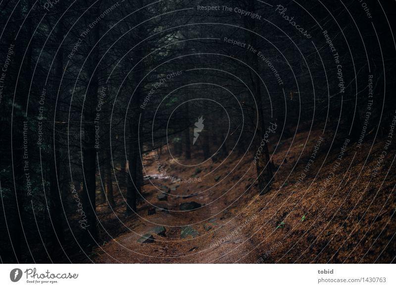 Märchenwald Natur Pflanze Herbst Baum Wald Hügel Berge u. Gebirge bedrohlich dunkel Wege & Pfade Fußweg mystisch Waldlichtung Endzeitstimmung kahl dünn Felsen