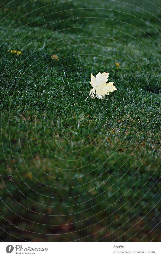 gelbes Ahornblatt auf einem Rasen im Oktober Herbstlaub Blatt grüner Rasen herbstliche Impression Einsamkeit einsam Traurigkeit traurig vergänglich