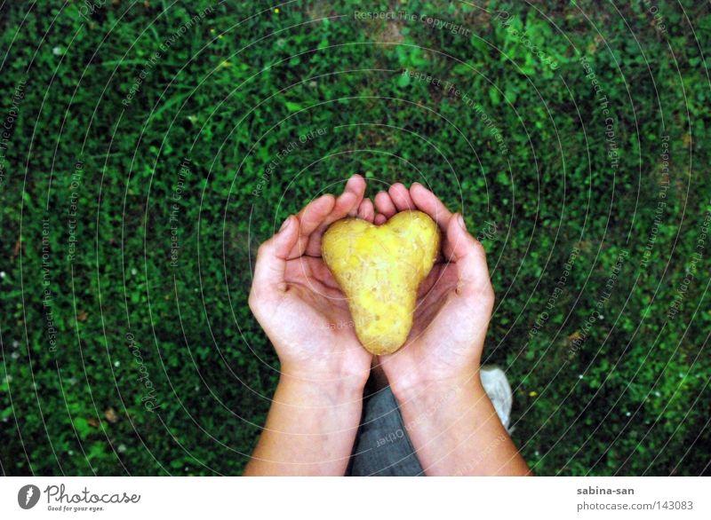 Herz - in welchen Händen liegt deines? Hand schön Einsamkeit Liebe Gras gehen ästhetisch einzigartig festhalten Gemüse Vertrauen verloren tragen Vorsicht Rest