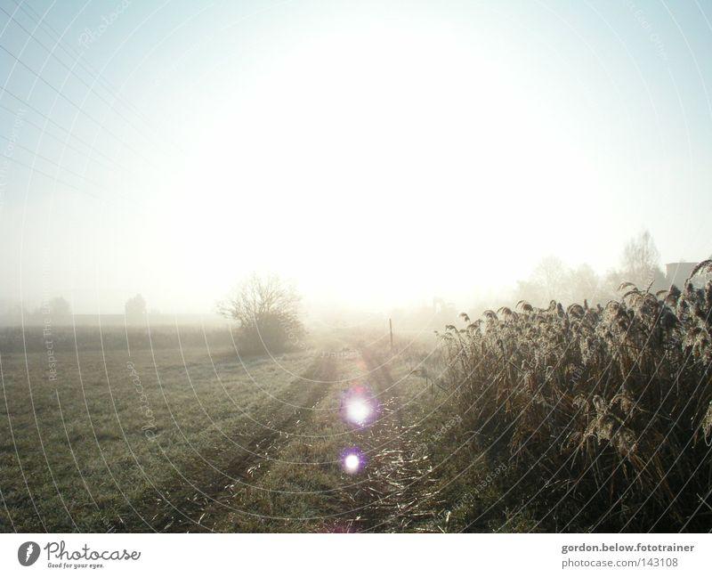 dem Licht entgegen... Sonne Winter Raureif Wege & Pfade Feld Schilfrohr Gegenlicht Sonnenstrahlen Frost Reflexion & Spiegelung Himmel Schnee