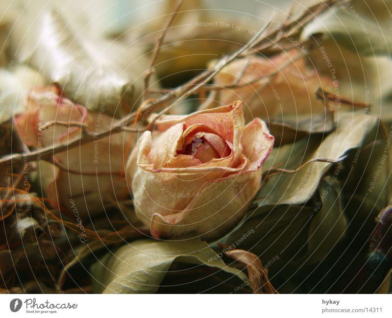 abschied Blatt weich Rose trocken Blumenstrauß Pastellton