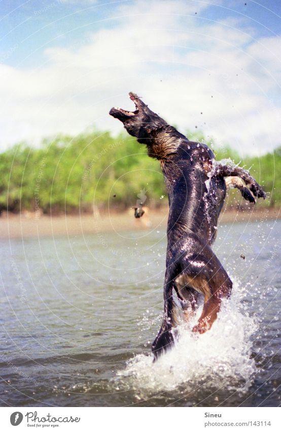 Aqua Aerobic III Hund Wasser Sonne Sommer Freude Tier Spielen Bewegung Küste Sand Glück springen See Schwimmen & Baden Wassertropfen Fell