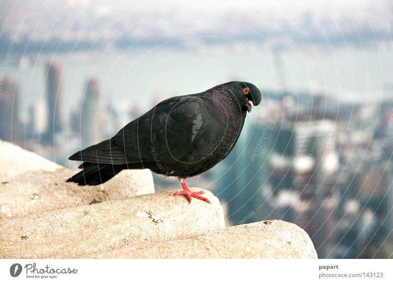 Schau mir in die Augen, Kleines schön schwarz Auge springen oben Luft Vogel Wohnung Wind fliegen Hochhaus Beginn hoch Luftverkehr Aussicht Dach