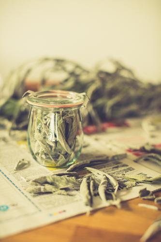 Konservieren statt kompostieren Lebensmittel Kräuter & Gewürze Salbei Bioprodukte Slowfood Tee Glück Gesundheit Alternativmedizin Wellness harmonisch Erholung
