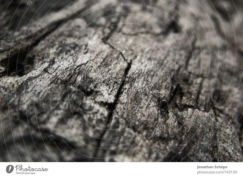 ein holz auf rügen Natur Baum dunkel Holz Wärme braun nah Vergänglichkeit verfallen Lebewesen Baumstamm Furche Riss Rügen Baumrinde Geäst