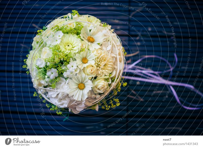 """Hochzeit Posy elegant Freude schön Veranstaltung Feste & Feiern Blume Rose Blüte Zusammensein Glück blau weiß Gefühle Fröhlichkeit Liebe Leben """"Blume"""
