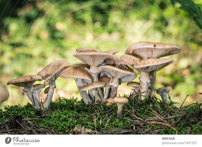 Natürliches Wachstum Natur Pflanze grün Wald Umwelt Herbst natürlich Zusammensein Energiewirtschaft Erfolg stehen Netzwerk viele Team Wirtschaft
