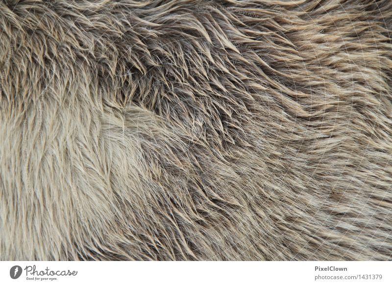 Winterfell Natur Tier grau Wachstum trocken Pferd Fell Zoo Nutztier Reitsport Streichelzoo