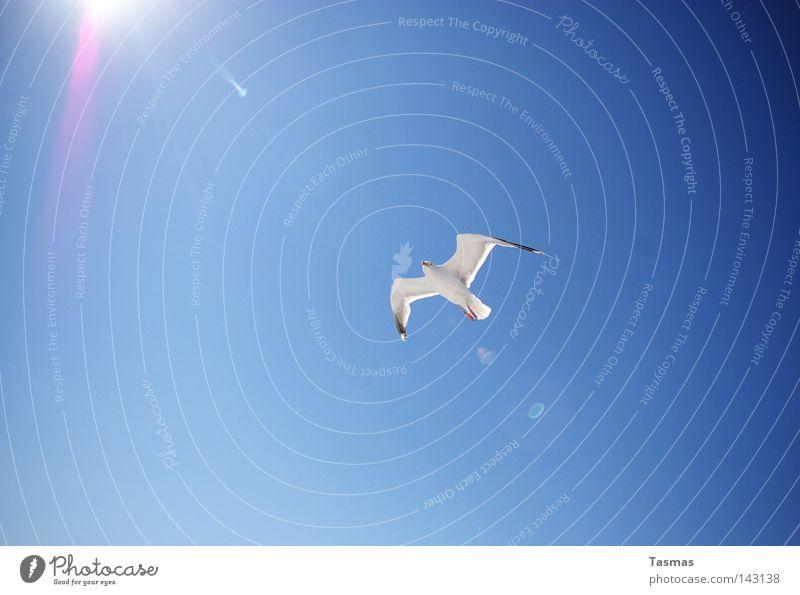 Touch the Sun Sommer Sonne Himmel Vogel fliegen blau Möwe Sonnenstrahlen Gegenlicht Vogelflug 1 Ganzkörperaufnahme weiß Wolkenloser Himmel Menschenleer